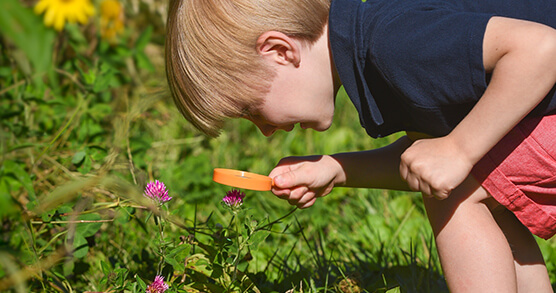 young boy views a pink flower through magnifying glass